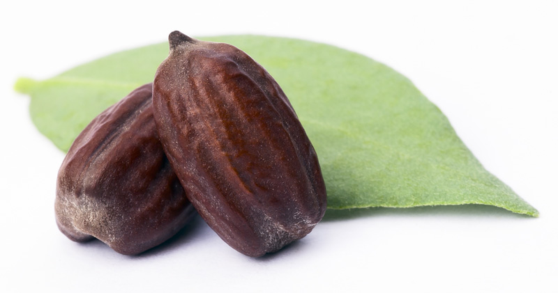 jojoba seeds ingredients